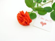 Free Red Rose Stock Image - 5717481