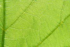 Free Green Leaf Stock Photo - 5718090