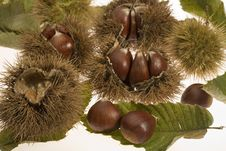 Free Chestnuts With Husks Royalty Free Stock Photos - 5718848