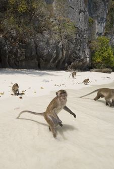 Monkeys On The Beach Royalty Free Stock Photos