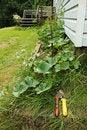 Free Garden Tools In A Garden Stock Image - 57184071