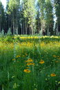 Free Flower Meadow Royalty Free Stock Image - 5722026