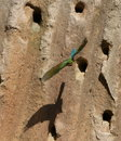 Free Bee-eater And Precipice Royalty Free Stock Photography - 5722717