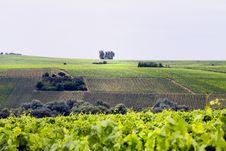 Free Vineyard Stock Images - 5720364