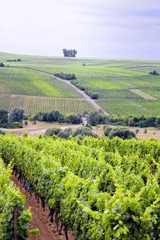 Free Vineyard Stock Image - 5720371