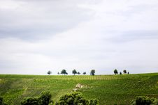 Free Hill With Vineyards Stock Photography - 5720622