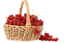 Free Red Currant Royalty Free Stock Images - 5720899