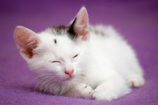 Free Sleepy White Kitten Stock Image - 5720971