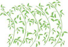 Vector Bamboo Tree Stock Photo