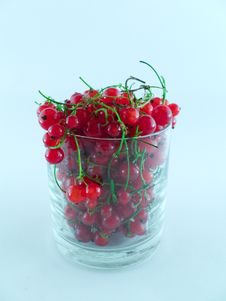 Currant Stock Photography