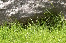 Free Green Grass And Stone Royalty Free Stock Images - 5721729