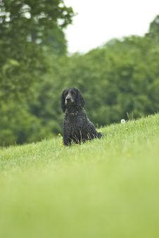Free Working Spaniel Stock Photography - 5721862