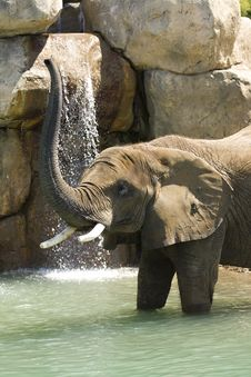 Free Elephant In The Lagoon Royalty Free Stock Image - 5722776