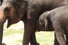 Free Elephant Stock Photography - 5722842