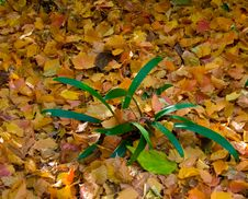 Free Golden Carpet Of Leaves Stock Image - 5722851