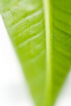 Free Leaf Stock Images - 5723054