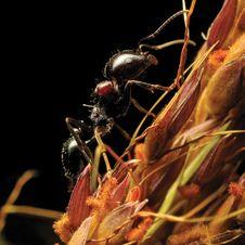 Free Ant Ascension.Macro. Stock Photo - 5723150