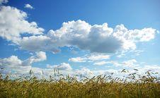Free Wheats On Sky Royalty Free Stock Photo - 5723525