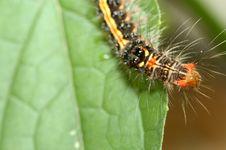 Color Caterpillar Stock Image