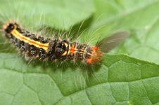 Color Caterpillar Stock Photos