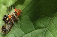Color Caterpillar Stock Images