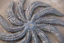 Blue Starfish Stock Photo