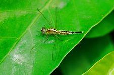 Free Dragonfly Royalty Free Stock Photo - 5723985