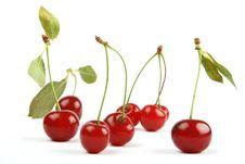 Free Cherries Stock Image - 5724941