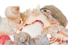 Free Shells Stock Photo - 5725480