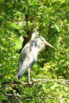 Free Stork Royalty Free Stock Photo - 5726085
