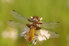 Free Dragonfly Stock Photography - 5726362