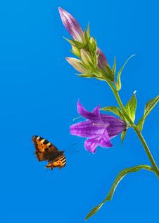 Free Butterfly Flies To A Flower Royalty Free Stock Photo - 5726415