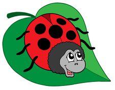 Free Cute Ladybug On Leaf Vector Illustration Stock Image - 5726571
