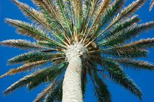 Free Palm & Sky Royalty Free Stock Photography - 5728307