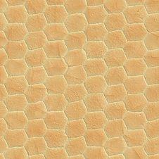 Free Snake Skin Stock Photo - 5728520