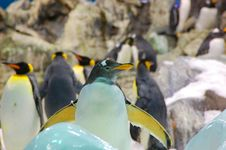 Free Penguin 2 Stock Images - 5728814