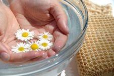 Free Homeopathic Bathing Medicine Royalty Free Stock Photos - 5729118