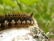 Free Caterpillar Stock Photography - 5729762