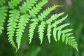 Free Fern Leaf Stock Image - 57277501