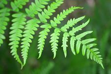 Free Fern Leaf Stock Image - 57277501