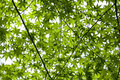 Free Leaves Stock Photography - 5733732