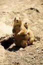 Free Chipmunks Stock Photos - 5739393