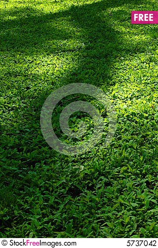 Free Grass & Shade Stock Photography - 5737042
