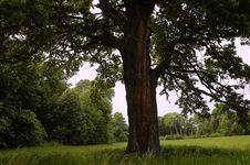 Free Old Tree Stock Image - 5730371
