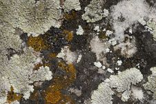 Free Lichen On The Stone Royalty Free Stock Photography - 5730727