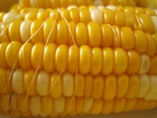 Free Corn Stock Photography - 5730772