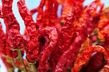 Free Dried Red Peppers Stock Image - 5730981