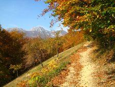 Free Autumn Road Royalty Free Stock Image - 5731196