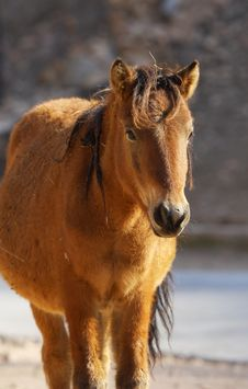 Free Horse Stock Images - 5731334