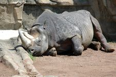 Free Rhinoceros Stock Photo - 5732010